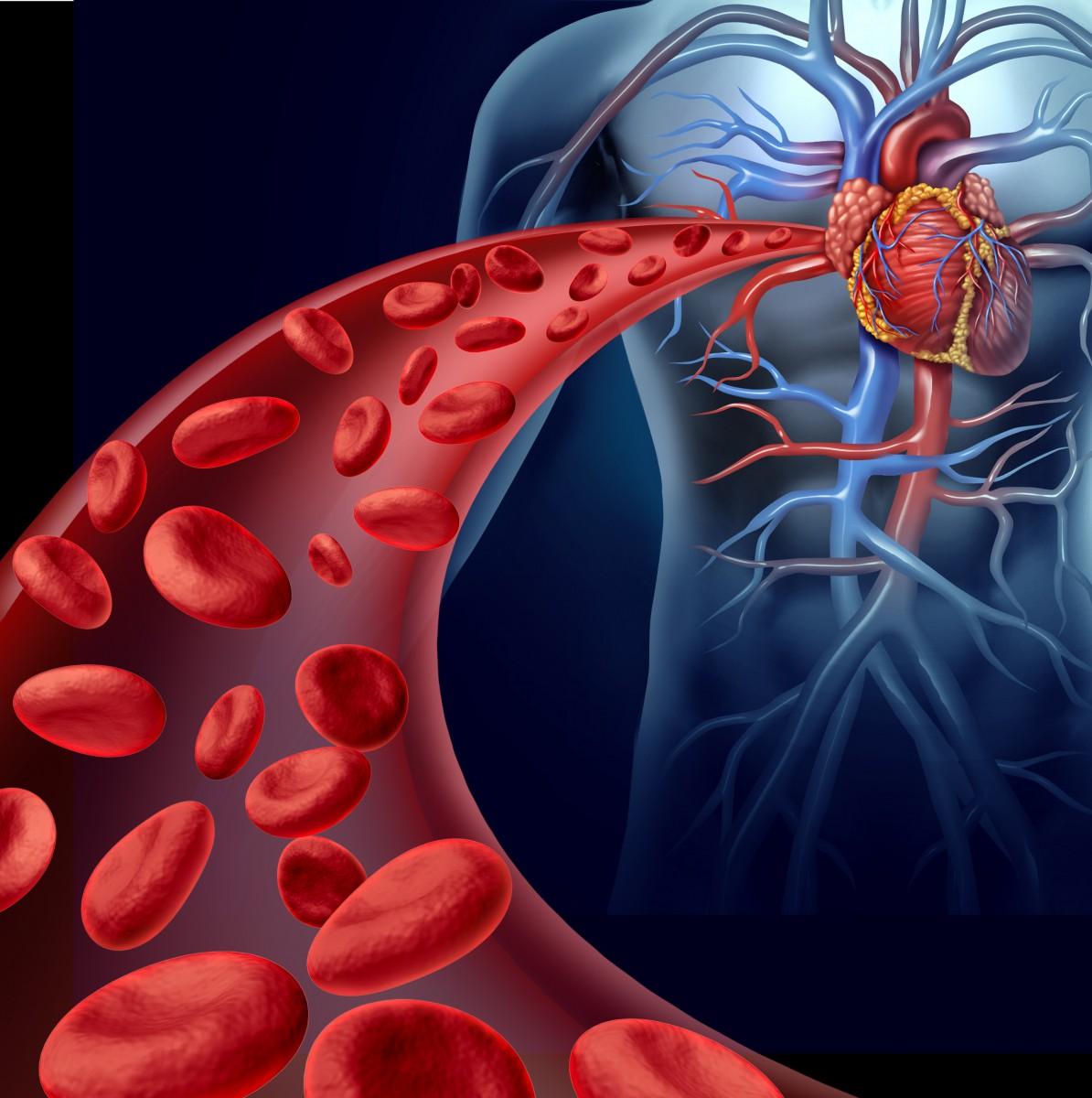 Средство от сердца в домашних условиях